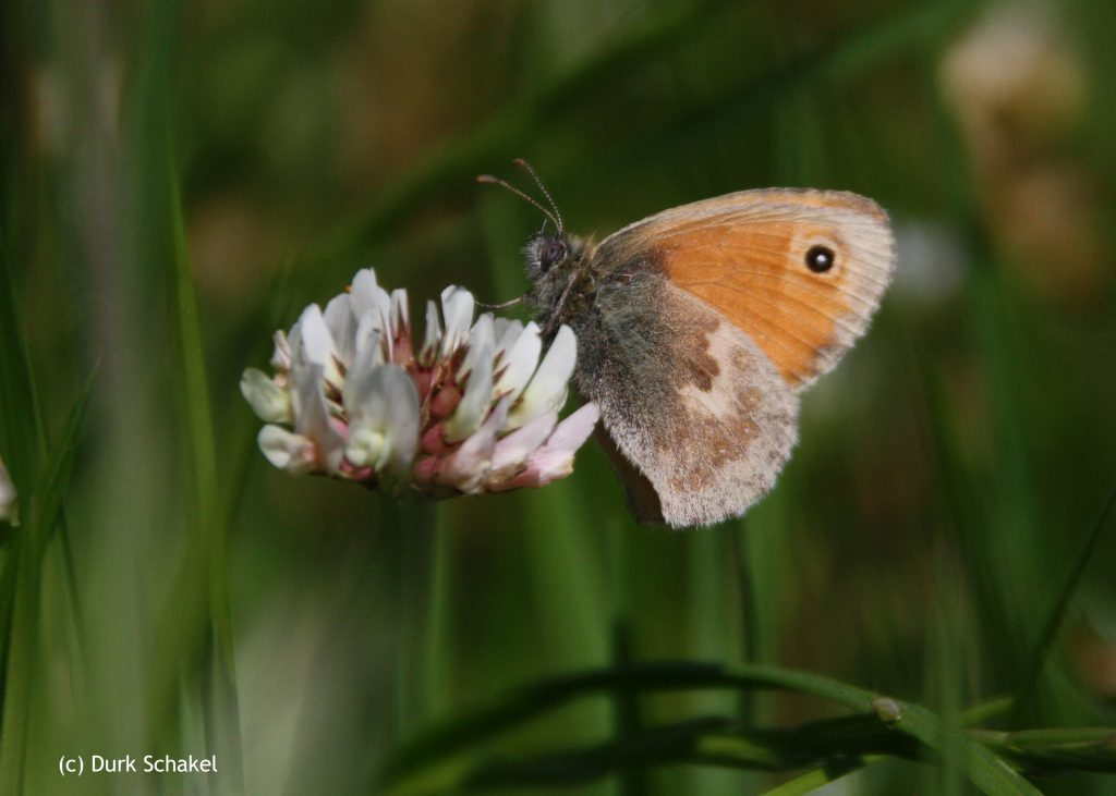 Small Heath - 2015