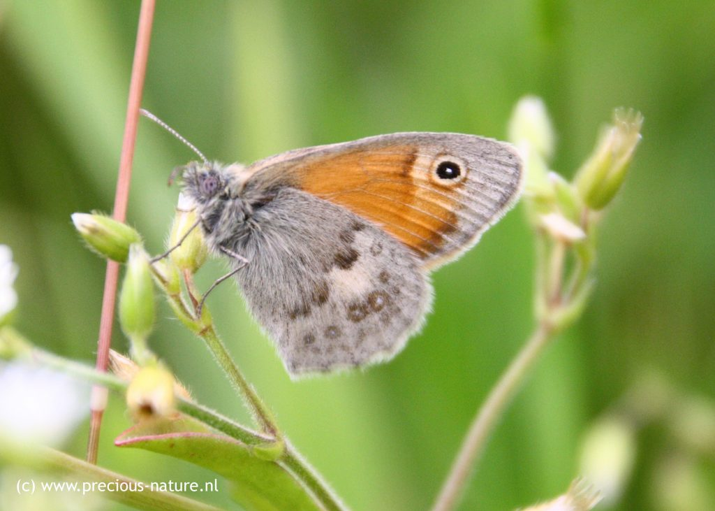 Small Heath - 2018