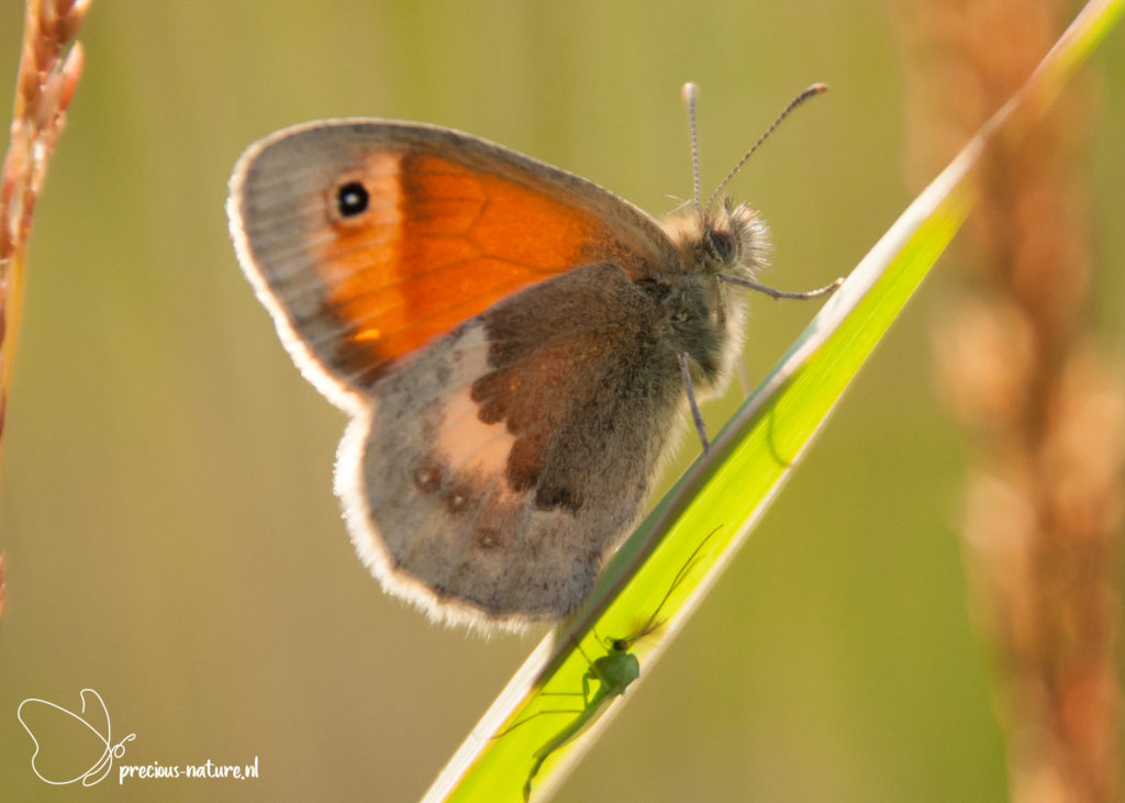 Small Heath - 2019